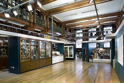 Grant Museum Of Zoology University College London View Central Space Design By